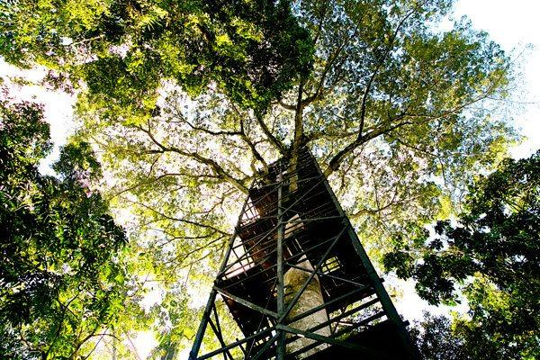 La Selva Amazon Ecoresort & Spa | Observation Tower