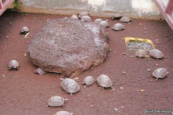 Giant Tortoise Breeding Center, Galapagos