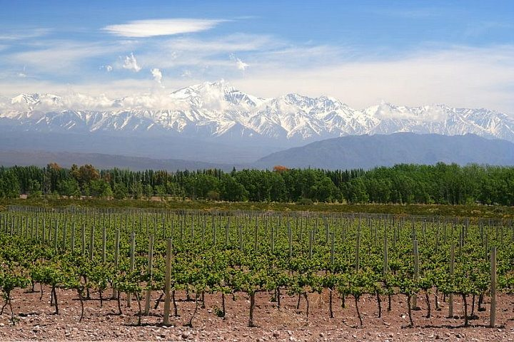 Vineyard and Andes, Mendoza, Argentina