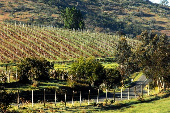 Matetic Vineyards | Rolling Hills