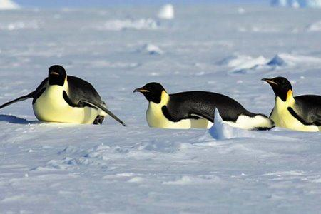 Destinations - Antarctica Tours & Cruises