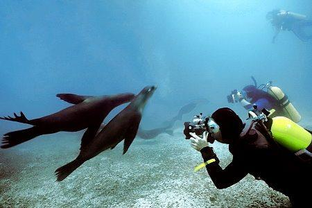 Interests - Scuba Diving Tours