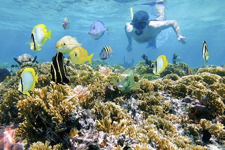 Interests - Snorkeling Tours