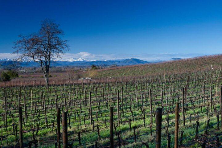 Vineyard, Lapostelle Wines, Cachapoal Valley, Chile