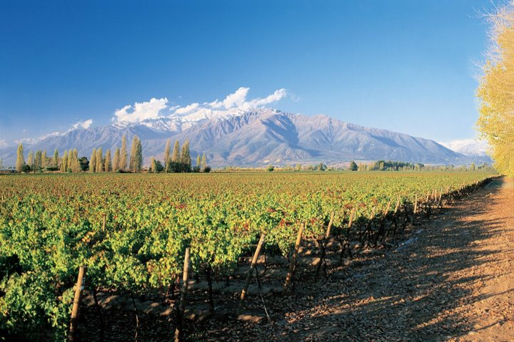 Concha y Toro Vineyard and the Andes